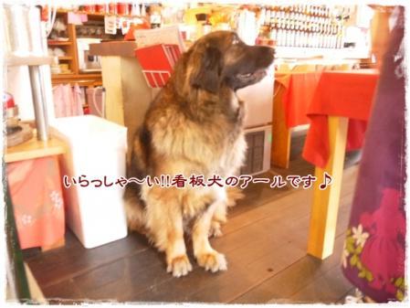 いらっしゃ~い!!看板犬のアールです♪