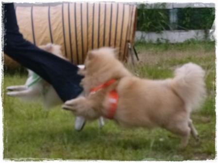 サリカン、ギリ飛行犬失敗・・・