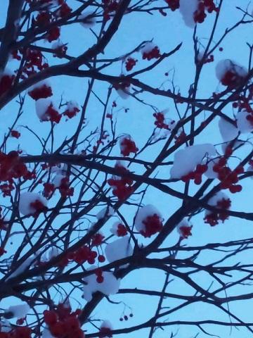 20131231用・赤い植物