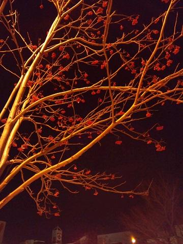 20131231用・赤い植物夜