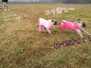 fc2_2013-11-12_06-48-51-247.jpg