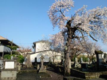 長命寺の墓所