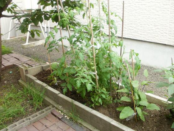 tomato2012.jpg