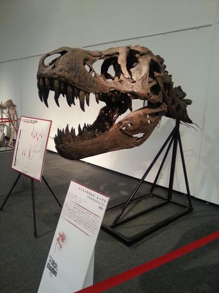 化石(サイズ変更)