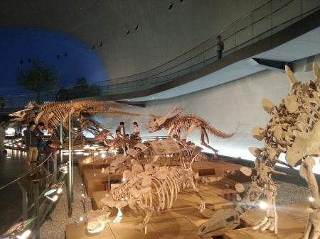 化石達(サイズ変更)