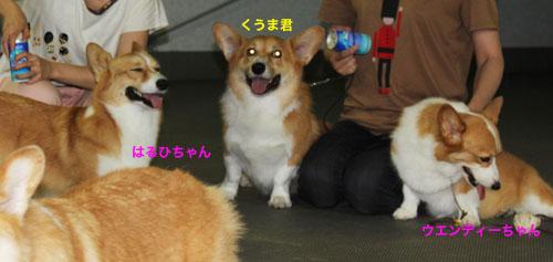 熊本の3天使