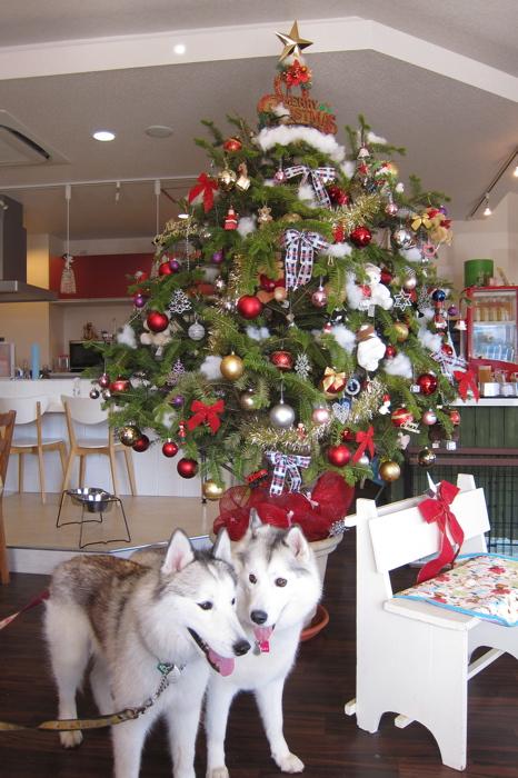 10)Xmas Treeと@Fetch img_4359