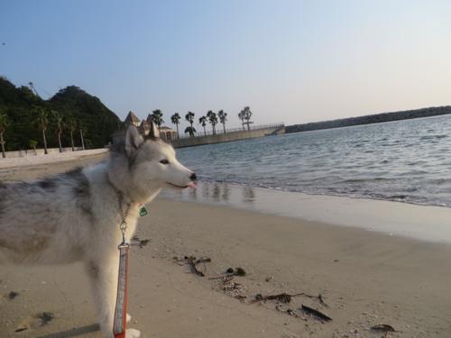 201309わかたの朝の海IMG_0941