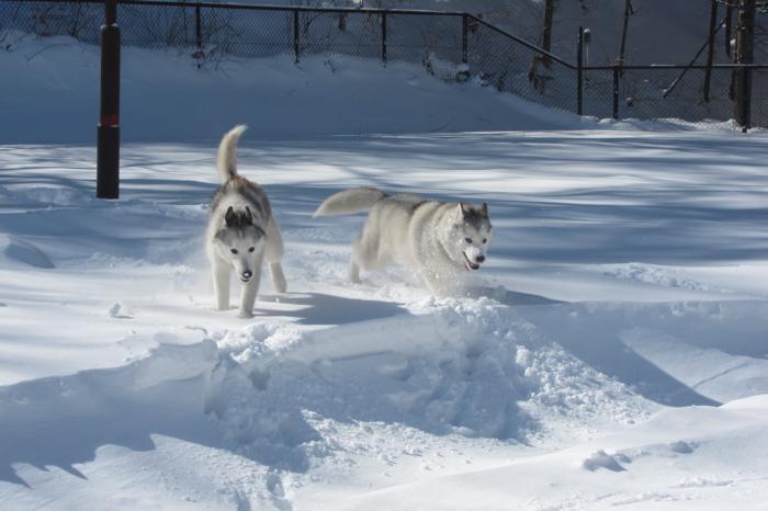 201302mirutannと一緒on Snow IMG_7639