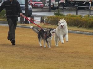 2013年12月福井・わん庵 149