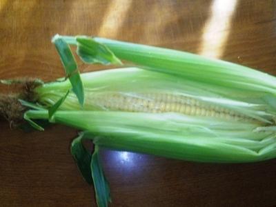 初収穫のトウモロコシ