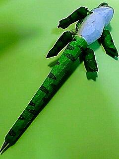 木彫り 蛙ボールペン