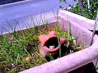 カエルin蛙