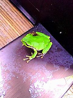 物干しの蛙