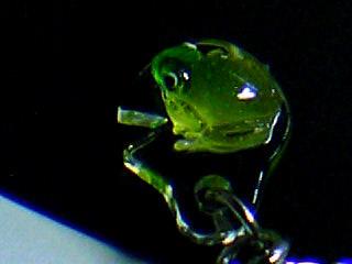 葉っぱ乗り蛙 3
