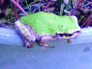 蛙 観察♪