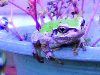蛙 観察 ドキドキ