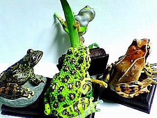 日本のカエル 一