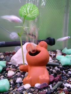 蛙のブクブク
