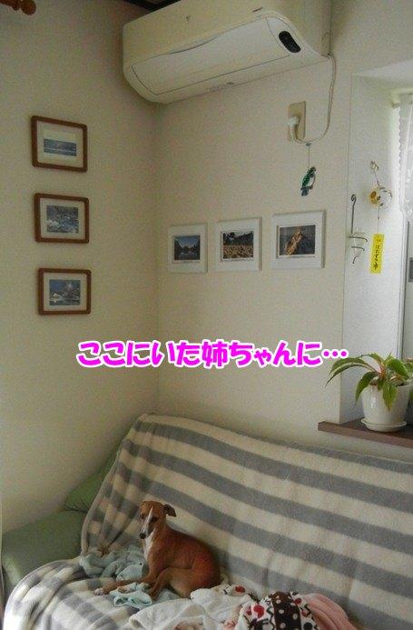 DSCN2765_20130507145326.jpg