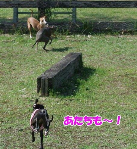 DSC_3713_20130922223210816.jpg