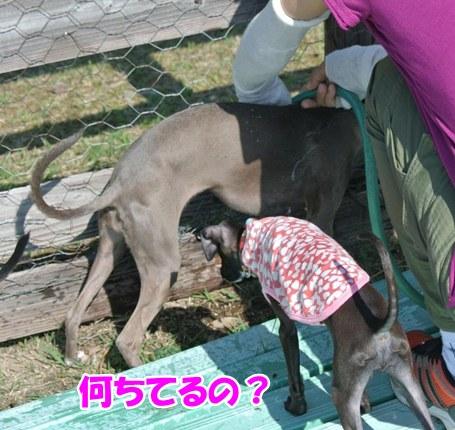 DSC_3735.jpg