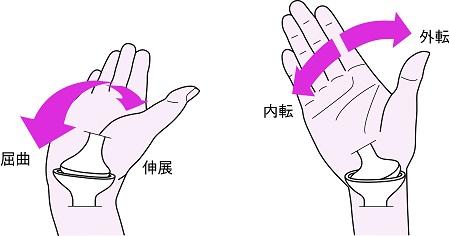 手関節の運動