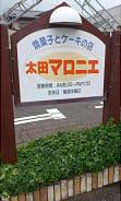 太田マロニエ (2)