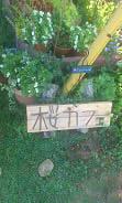 桜カフェ (2)