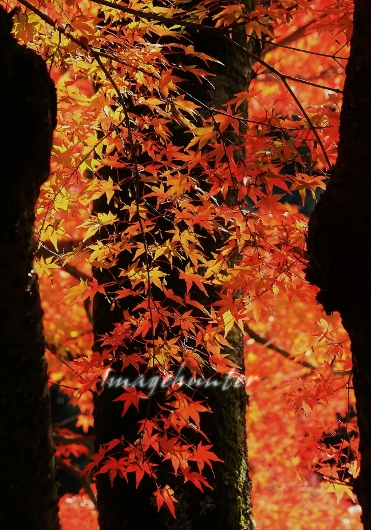 立木 (371x530)
