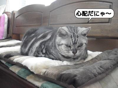 20110129_121039モモ.jpg