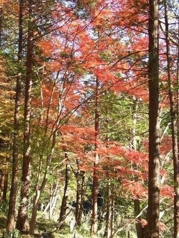 きれぎれの風彩 「嵐山渓谷 カエデの紅葉」1-11