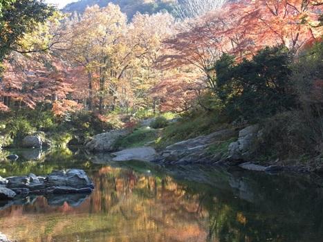 きれぎれの風彩 「嵐山渓谷 カエデの紅葉」1-13