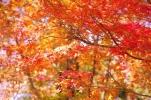 紅葉は綺麗だったかな。