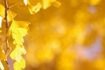 黄色い葉っぱ♪