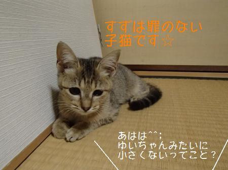 PA180302_convert_.jpg