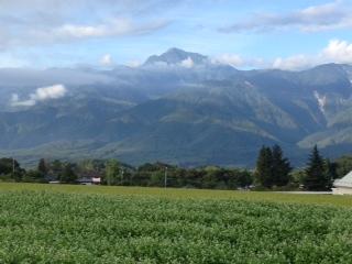 蕎麦の花と山