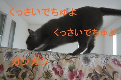 010_20140113171027cbd.jpg