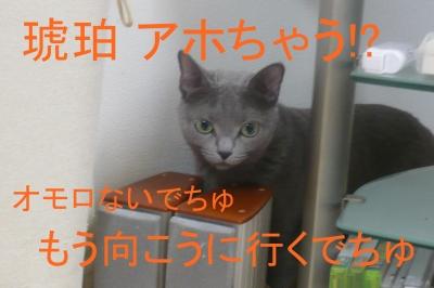 029_20131211220823258.jpg