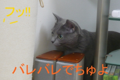 030_20131211220824fcd.jpg