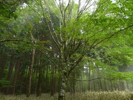 皿ヶ嶺の木々 2
