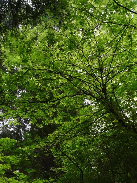 皿ヶ嶺の木々 1
