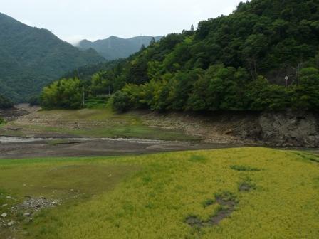 金砂湖 4