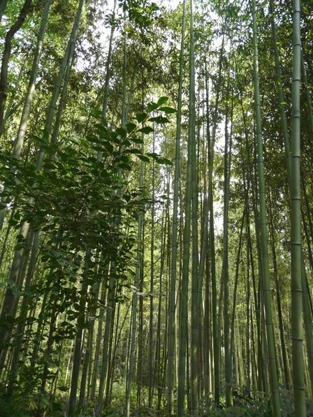 憩いの森・HACHIGATA 真竹