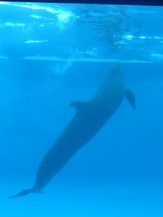 大洗水族館 イルカのショー 1