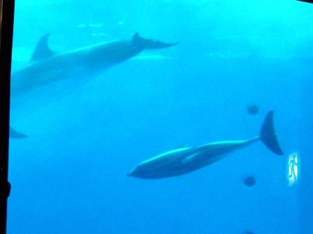 大洗水族館 イルカのショー 2