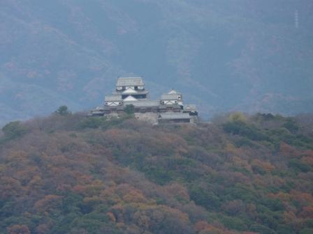 松山総合公園から見た松山城 2