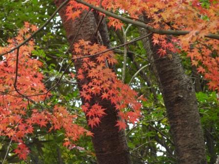 松山総合公園 紅葉 4