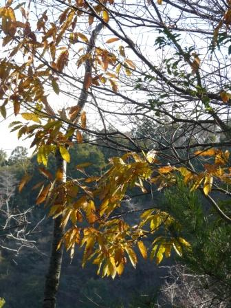 谷上山 紅葉・黄葉 4