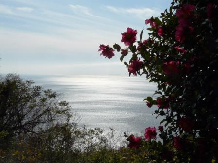 佐田岬半島 大久展望台からの眺望 2